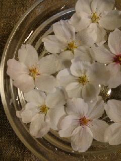桜さくら.jpg